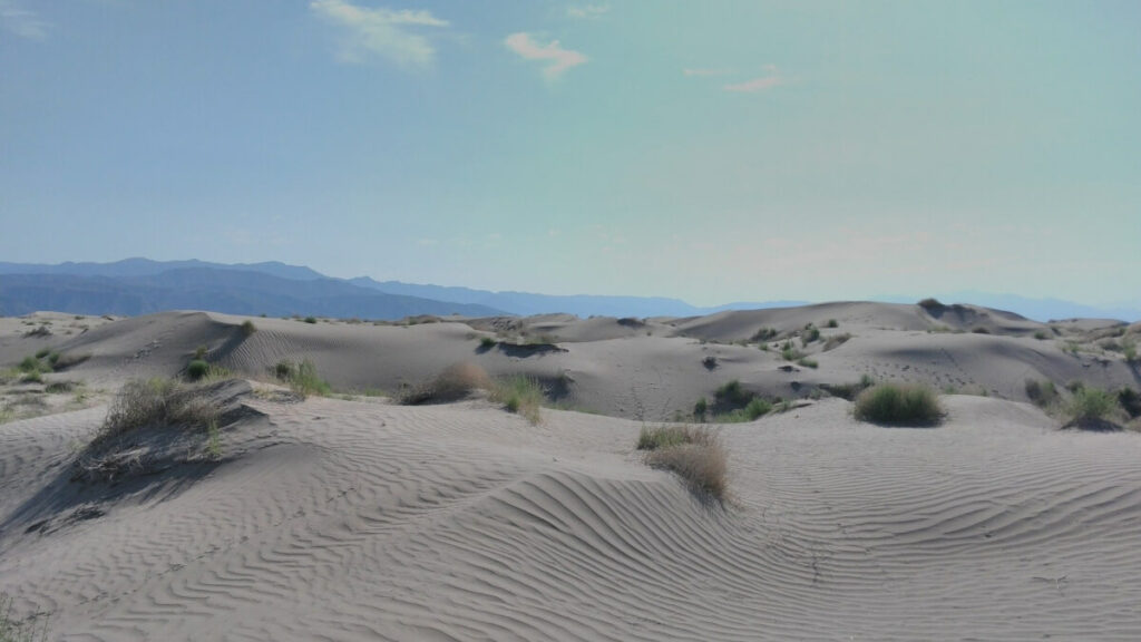 Sand dunes and a few plants in a Mexican desert.
