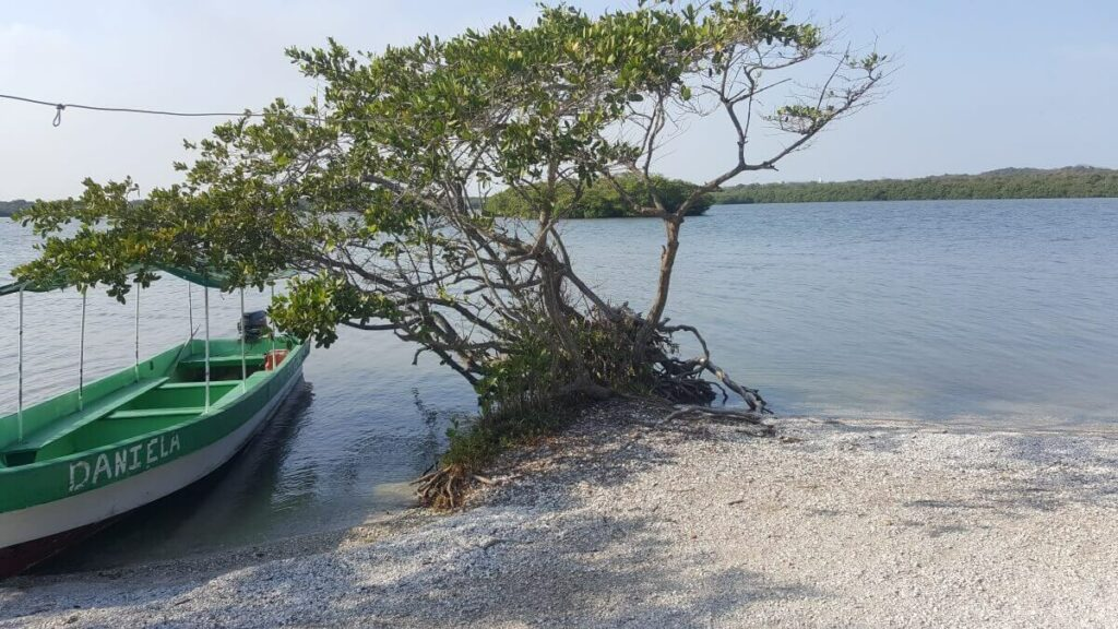 Small boat tied to a tree on an island in Veracruz.