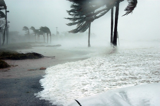 A few palm trees being battered by a hurricane.