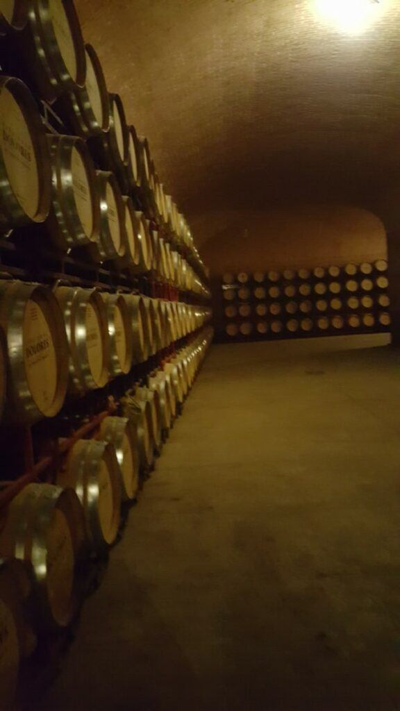 A wine cellar with many barrels.