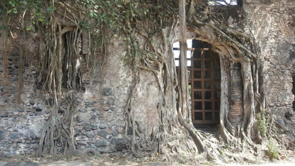 An old building with tree roots all over it.